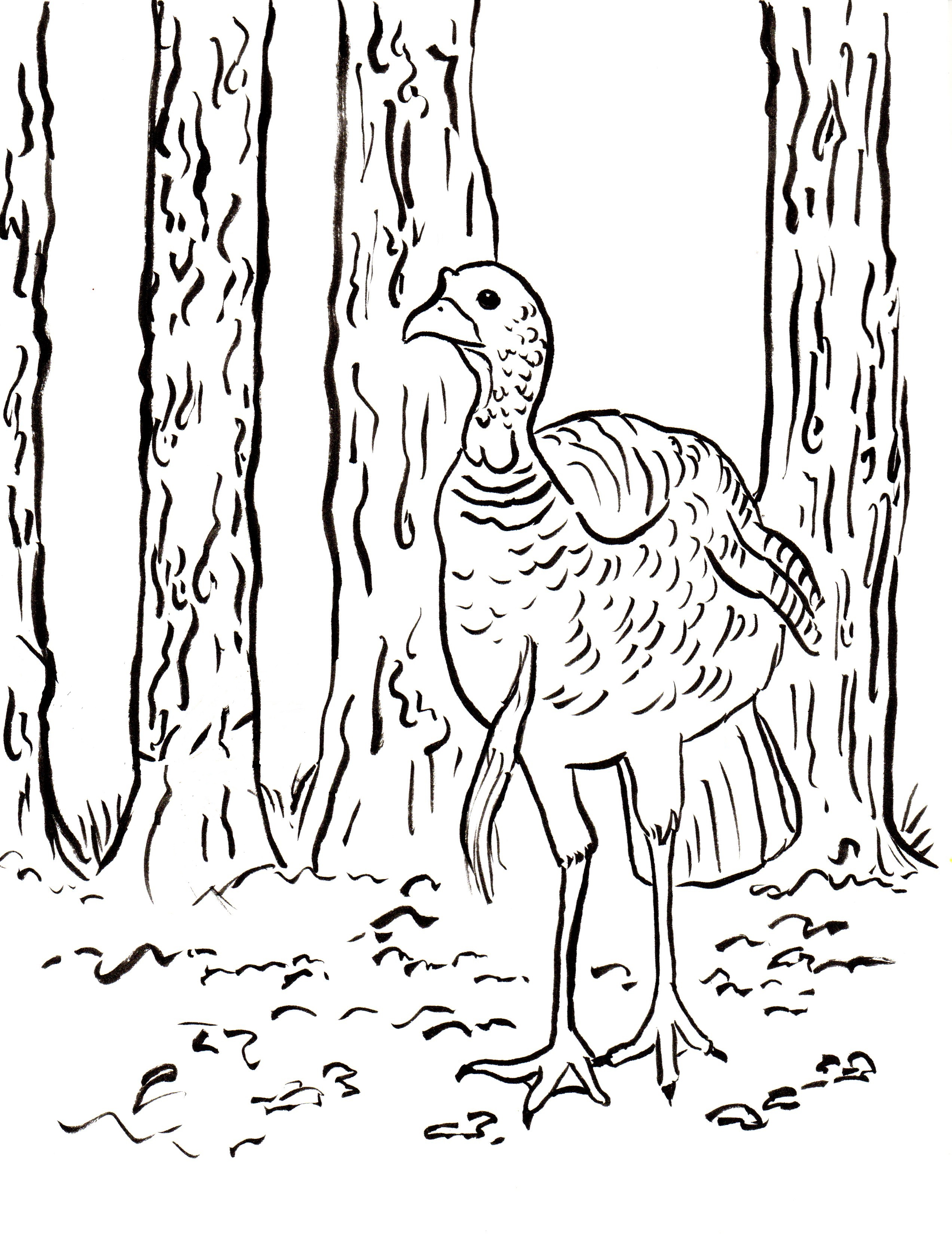 Turkey coloring page | Free Printable Coloring Pages | 3300x2545