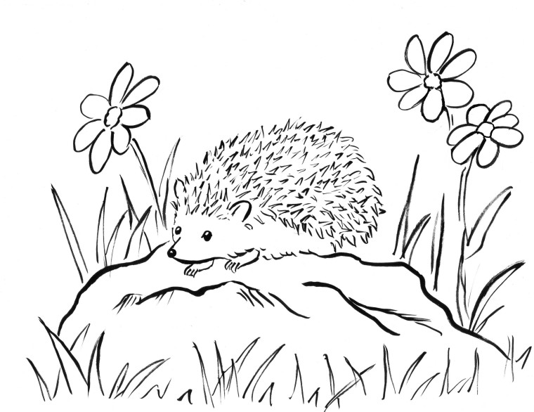 Line Drawing Hedgehog : Hedgehog coloring page samantha bell