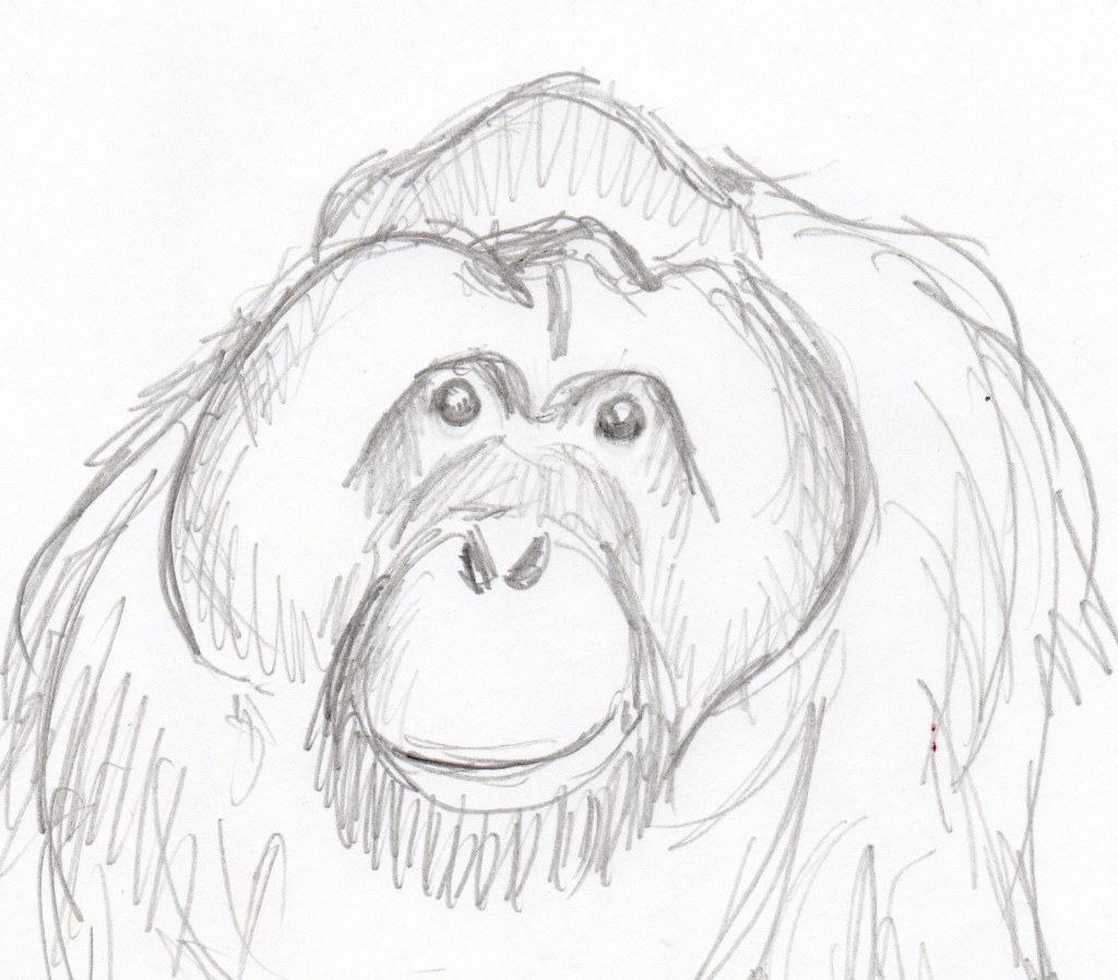 Uncategorized Orangutan Drawing drawing prompt for 1 2 16 samantha bell orangatan drawing