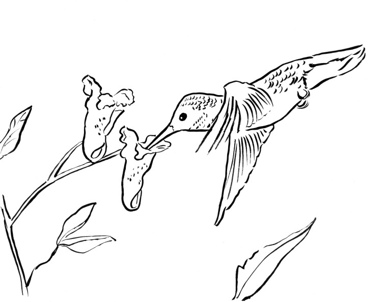 Hummingbird Coloring Page - Art Starts for Kids