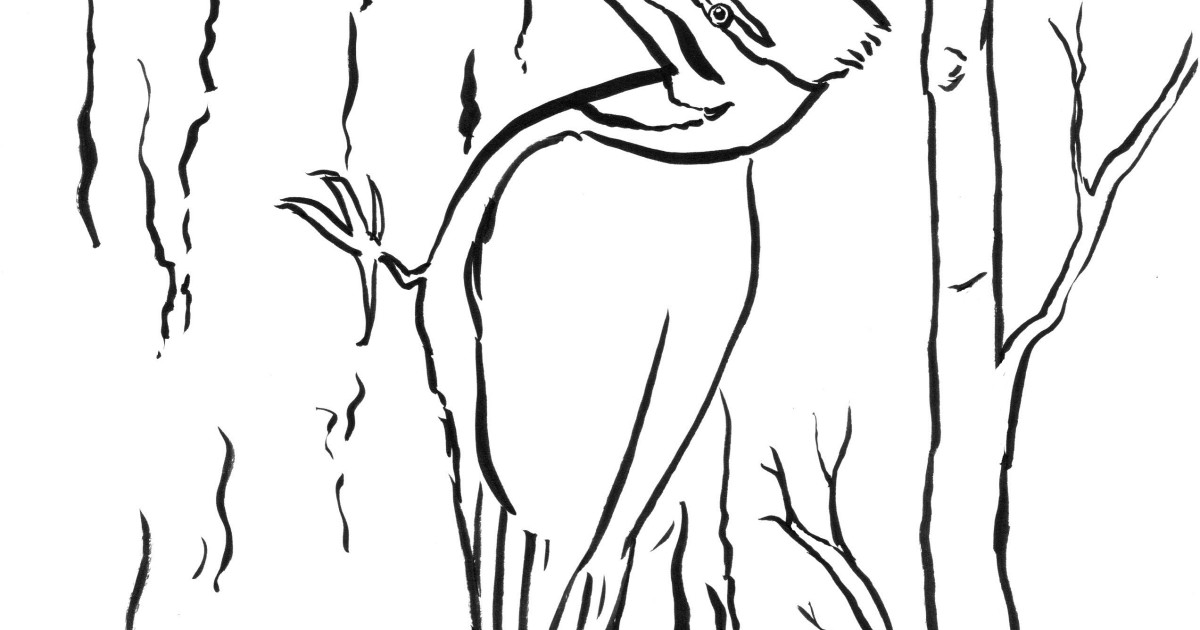 woodpecker coloring page coloring pages ideas