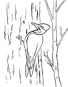 woodpecker coloring page