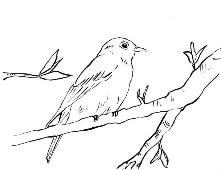 Bluebird Coloring Page Samantha Bell Blue Bird Coloring Pages