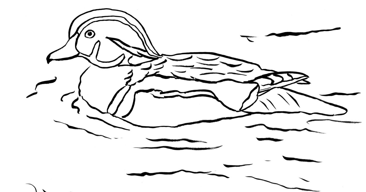 Wood Duck Coloring Page