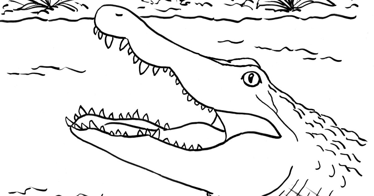 alligator open mouth coloring page alligator coloring pages getcoloringpages com alligator