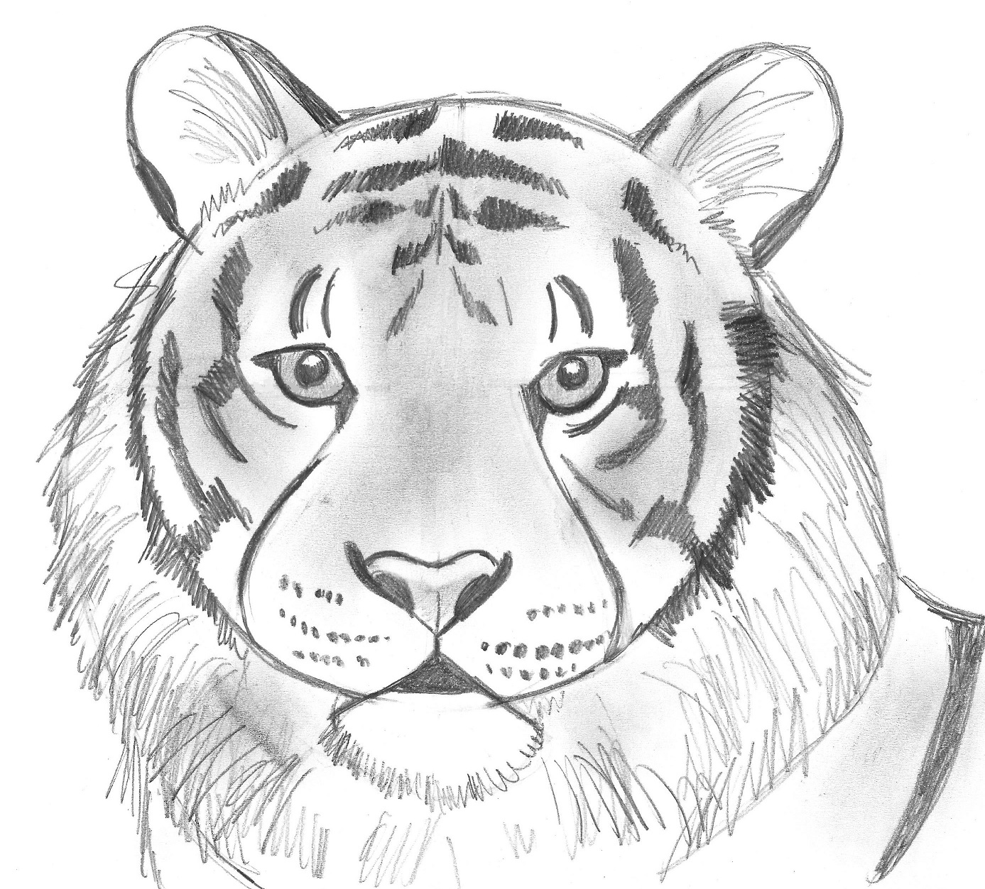 Draw 25 wild animals even if you dont know how to draw