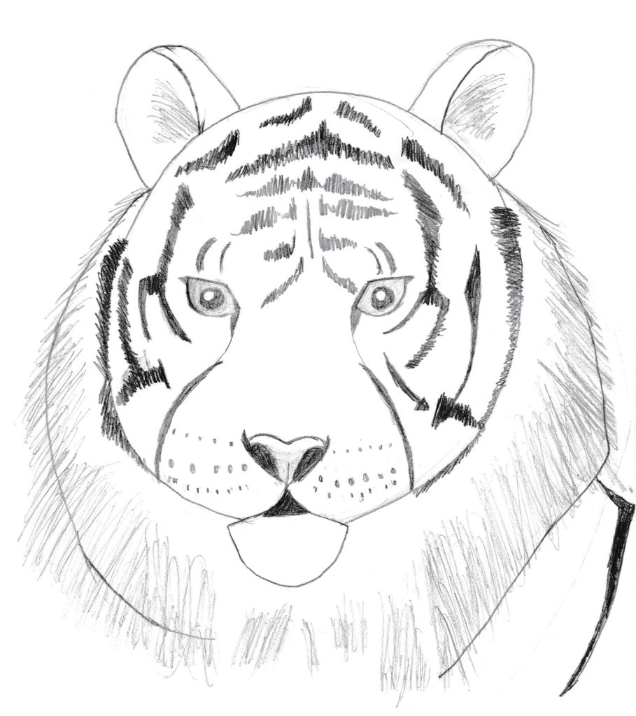 animals wild draw tiger know don even age laura2