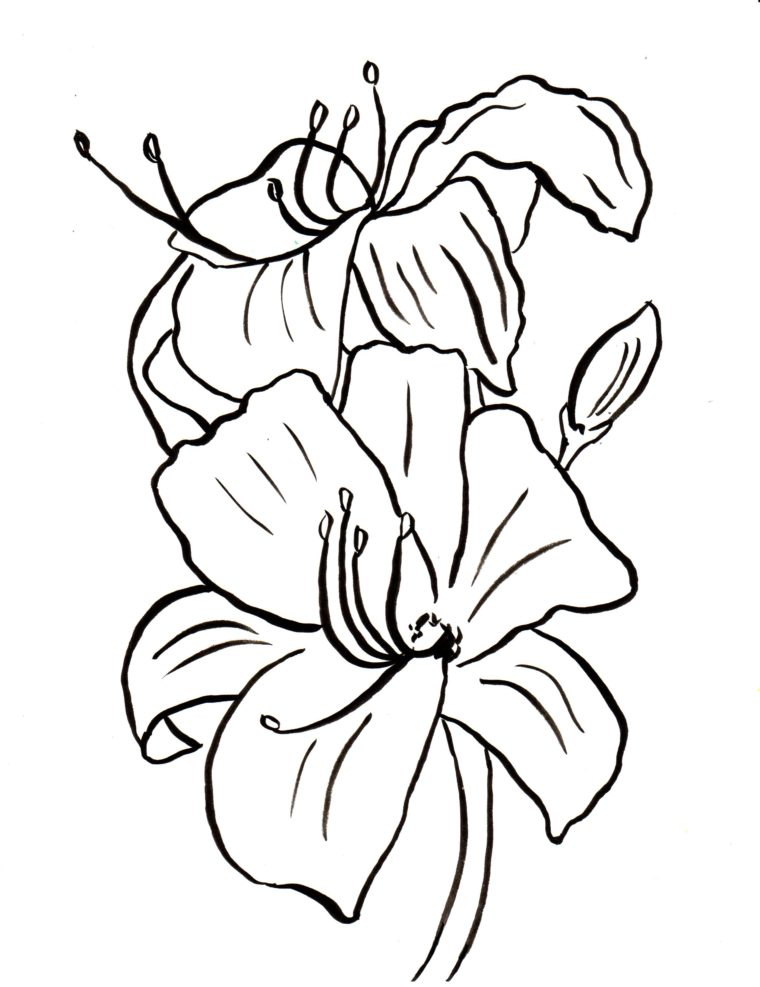 lily coloring pages Lily Coloring Page   Samantha Bell lily coloring pages