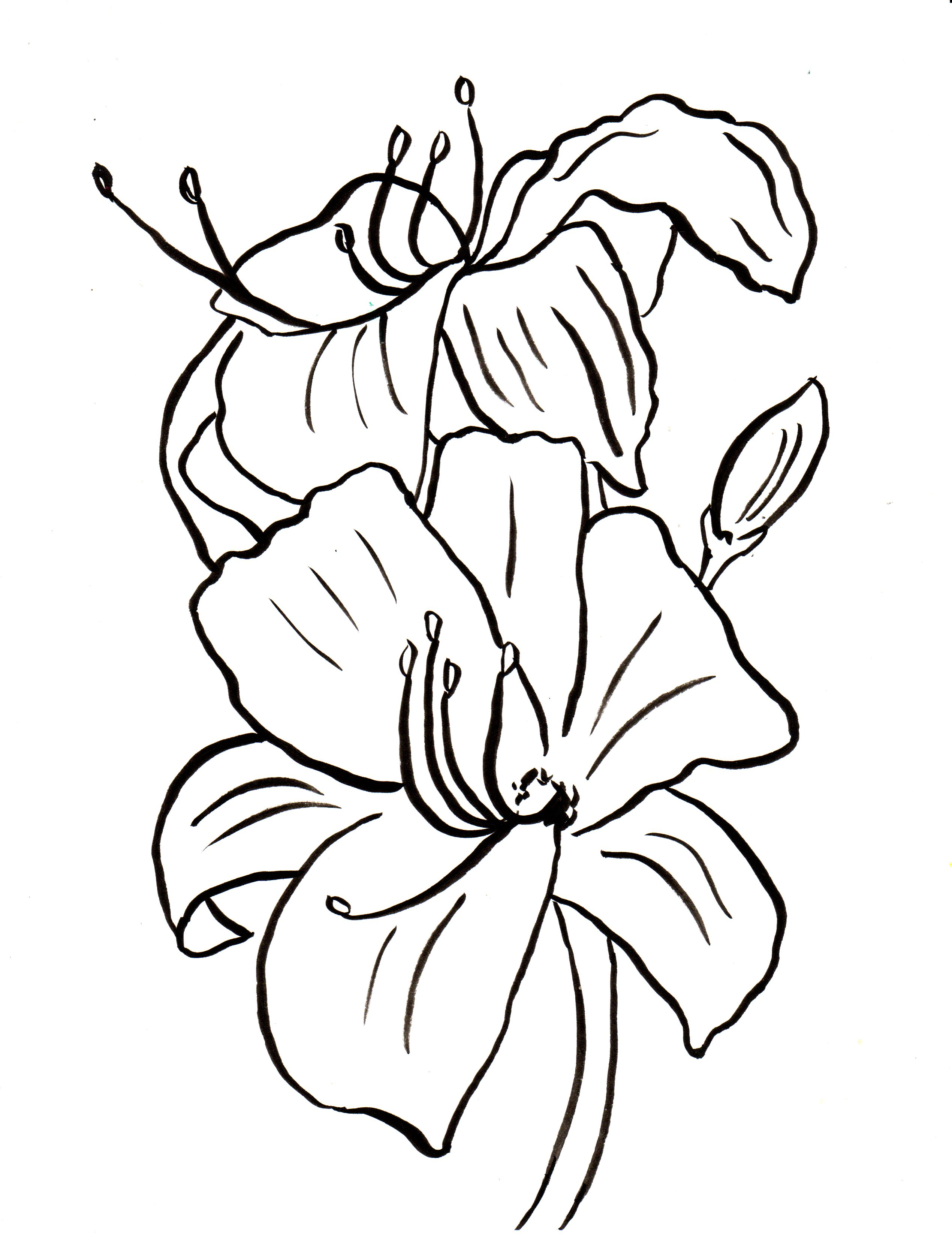lily coloring book pages - photo#5