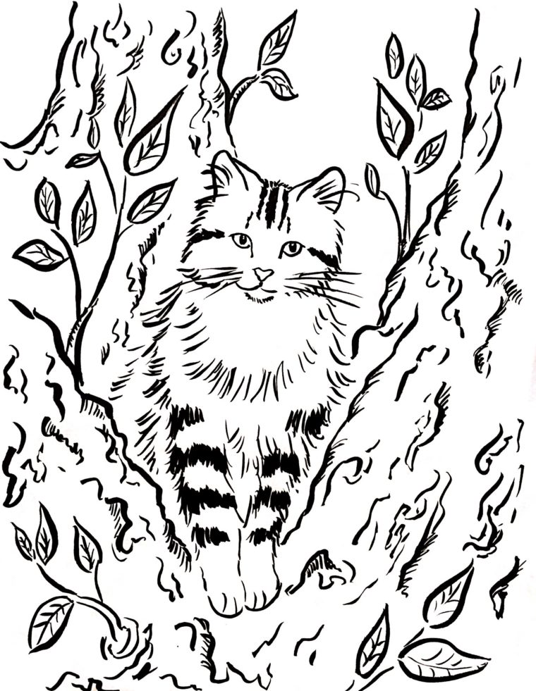 Cat In A Tree Coloring Page