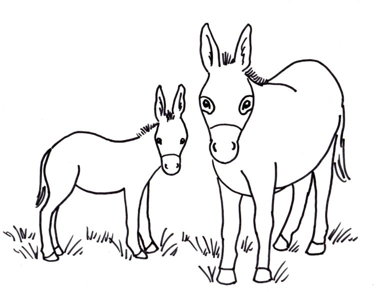 donkey coloring pages Donkey Coloring Page   Samantha Bell donkey coloring pages